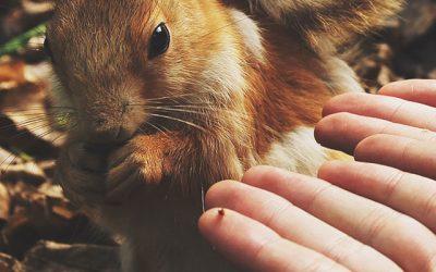 Curso: Comunicación con Animales