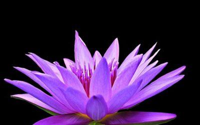 Retiro de Meditación, Voz, Sonido y Cuerpo