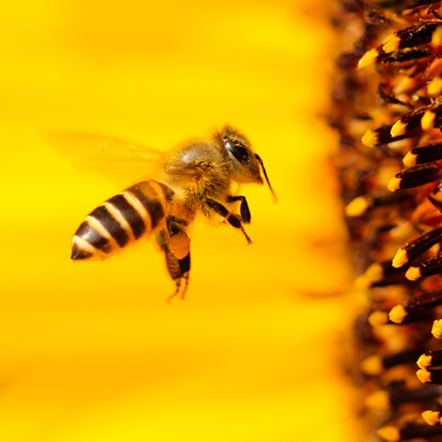 XVIII Feria de la Miel en Navacerrada