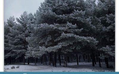 La magia y el misterio de los árboles.