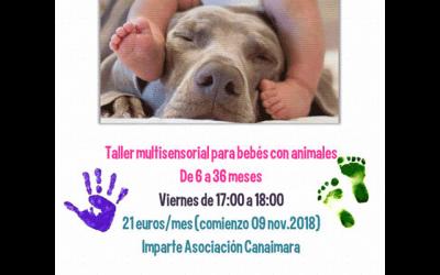 "Taller: ""Bebés y mascotas"""