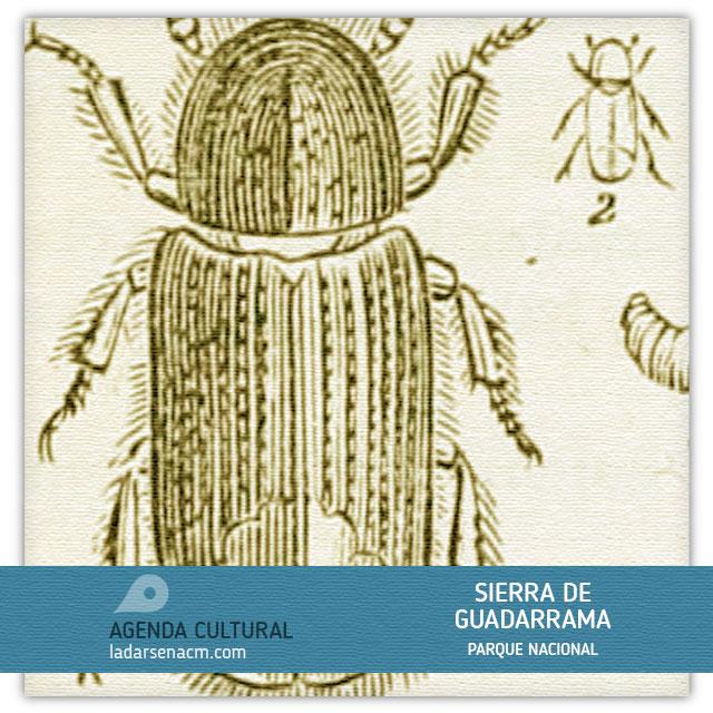 Fauna invisible: El Barrenillo Albillo.