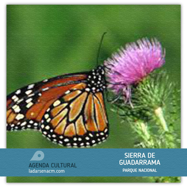 Proyecto Mariposa.