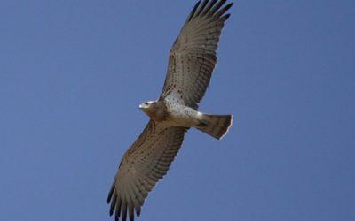 """Taller de Iniciación a la Ornitología: """"Con alas en la mirada""""."""