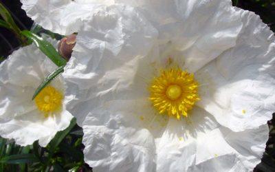 """Senderismo: """"De flor en flor"""""""