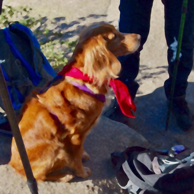 """Ruta con mascotas """"Arroyo de la Gargantilla"""""""