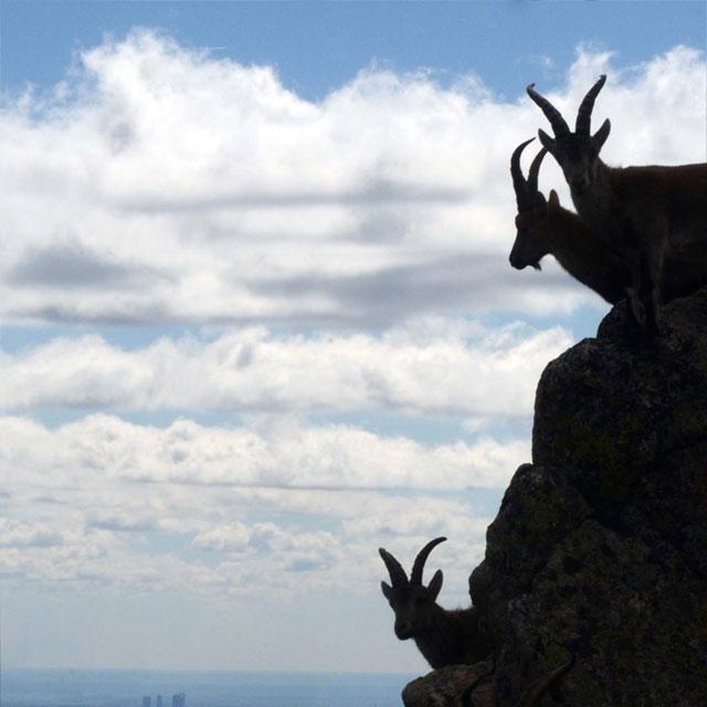 La Sierra de Guadarrama, uno de los mejores espacios a los que ir tras la crisis del coronavirus.