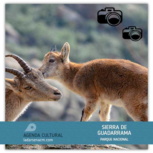 V Concurso de Fotografía Parque Nacional Sierra de Guadarrama (2020)