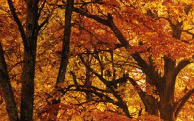 """Marcha guiada: """"Los colores del bosque"""""""